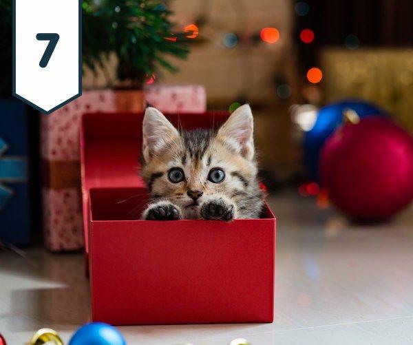 Sept décembre 2017....calendrier de l'avent et cadeaux....