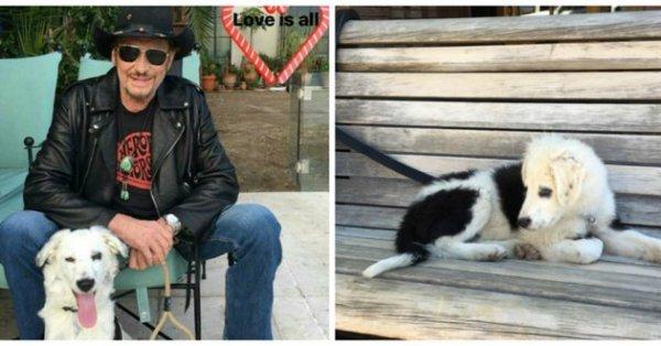 Johnny Hallyday, un amoureux des animaux!