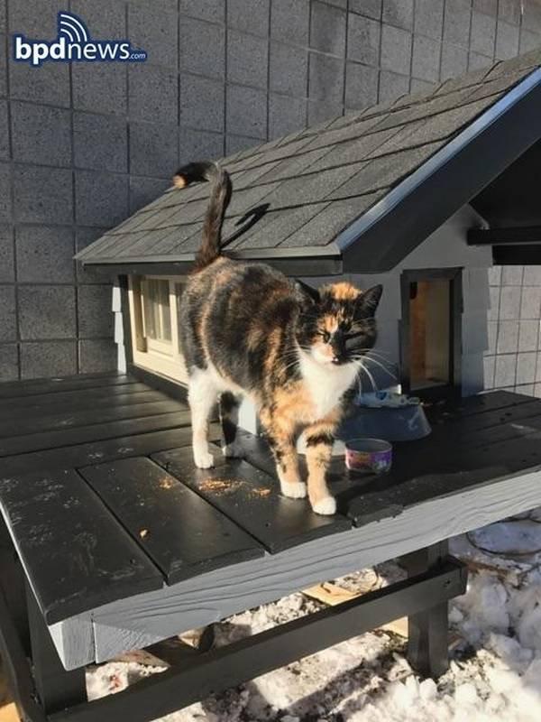 Une jolie histoire pour Noël: Ces policiers ont construit une petite maison pour cette chatte errante qui s'est liée d'amitié avec eux