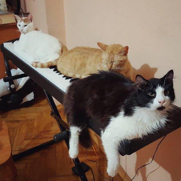 Ce pianiste sauve des chats blessés et ils lui montrent leur amour de la plus belle des façons