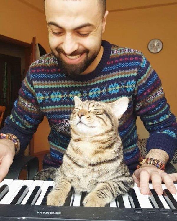 Ce pianiste sauve des chats blessés et ils lui montrent leur amour de la plus belle des façons...suite et fin!