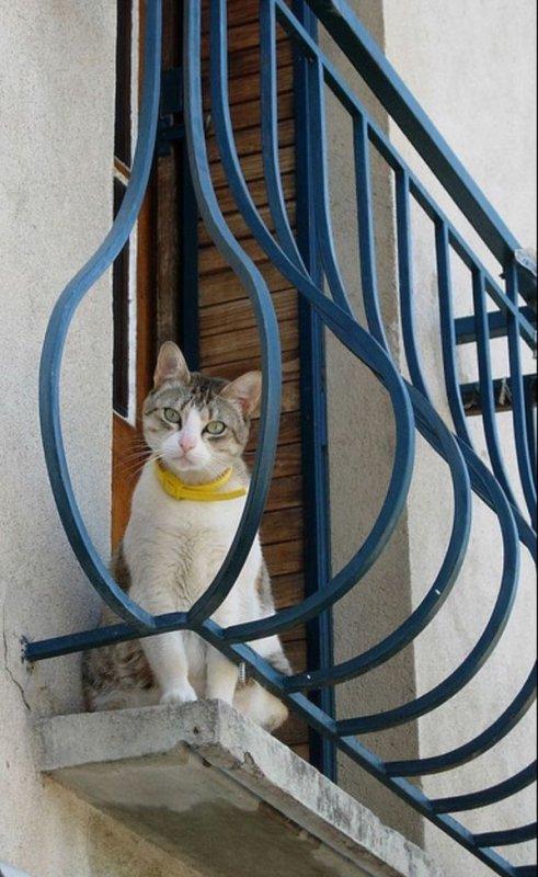Attitudes 'Cats