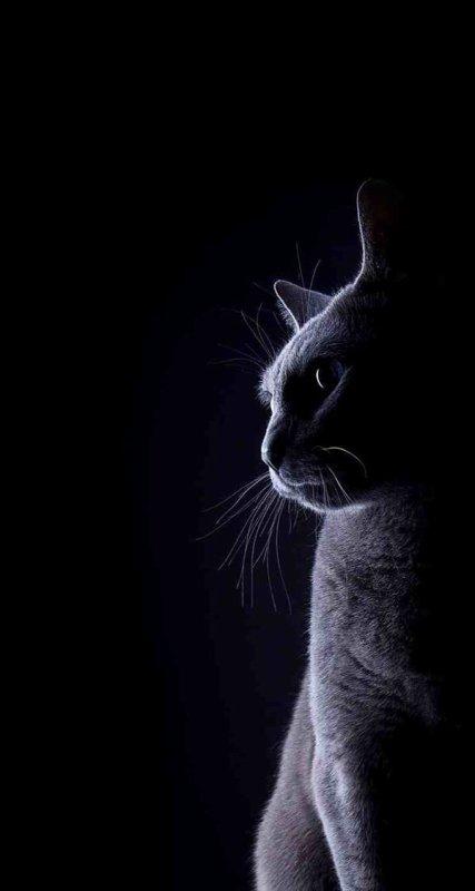 Profils de Cats ....