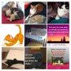 Petits Montages avec tous mes Chats :Hubert, Caramel, Marilou, Mooky, Merlin....