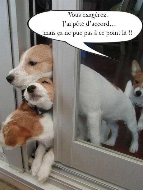 Humour Canine