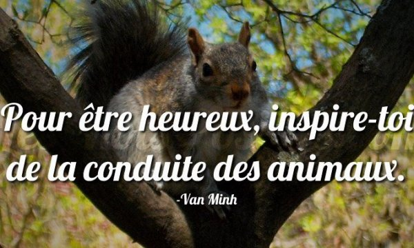 Citation animale