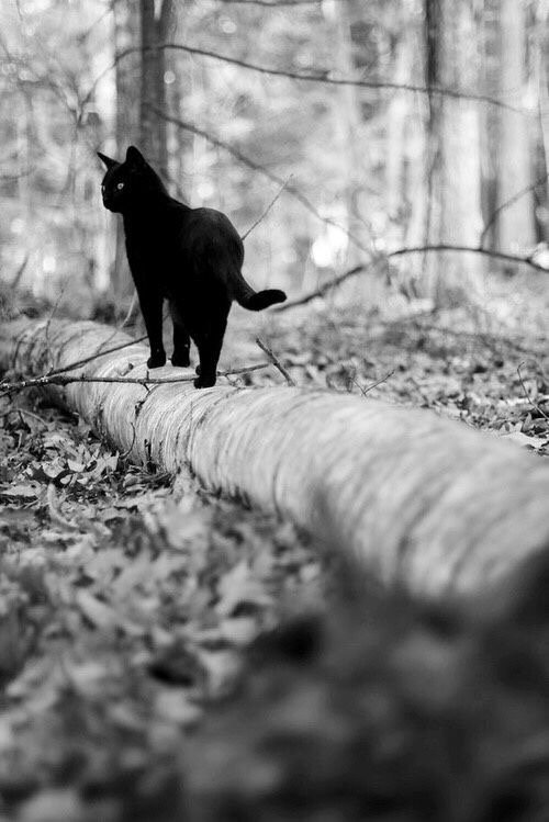 Attitudes Cats Noirs.....