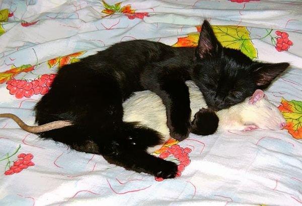 Trop adorable mais le lézard endormi dans une rose est sublime.