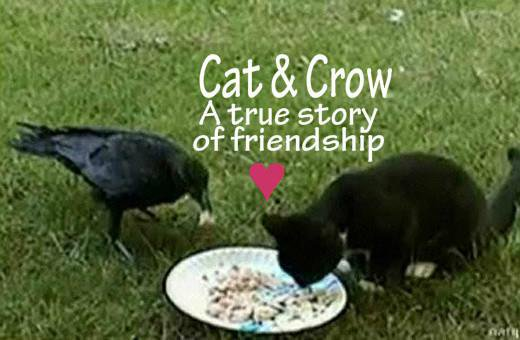Elle trouve un chaton abandonné dans son jardin, puis un corbeau arrive et fait l'impensable