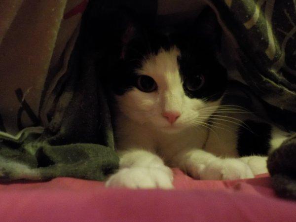 Marilou adore se cacher, n'est-elle pas mignonne?