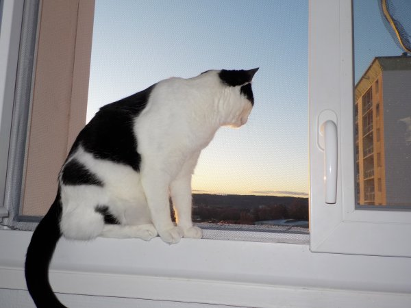 """Ma petite commère """"Marilou"""" est là où elle adore, un joli point de vue pour guetter les oiseaux!"""