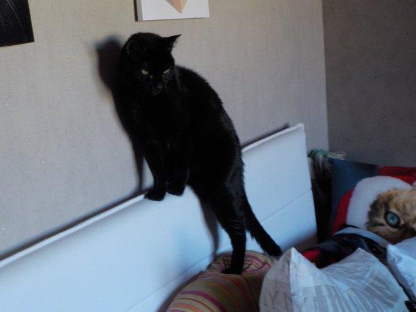 Mon petit Merlin, fait le Foufou, je ne sais pas ce qu'il veut faire?, lui, non plus d'ailleurs?