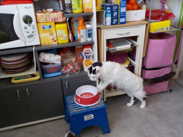 Mooky et son manque de logique, qui au lieu de contourner le coin gamelle de ma chienne, passe par dessus???