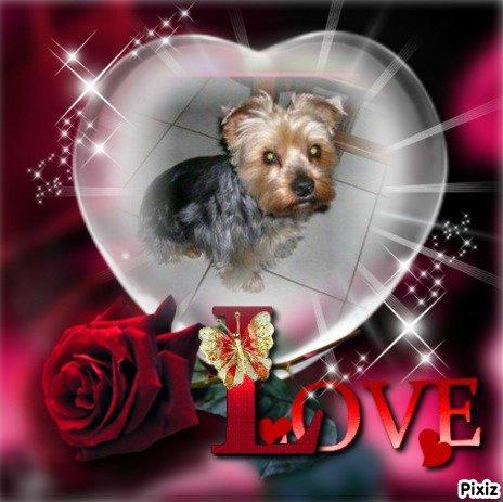 Petit Hommage à Tobby, un petit chien cher au coeur de Nicky, Bon courage!