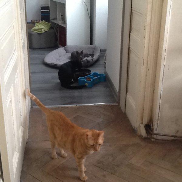 Ma Fille à adopté un nouveau Chat, c'est le petit Gris tout musclé, il est adorable comme tout et répond au doux nom de César, le tout roux c'est Popcorn, le petit noir timide c'est Nino et bien sûr la chienne c'est notre Malika.....
