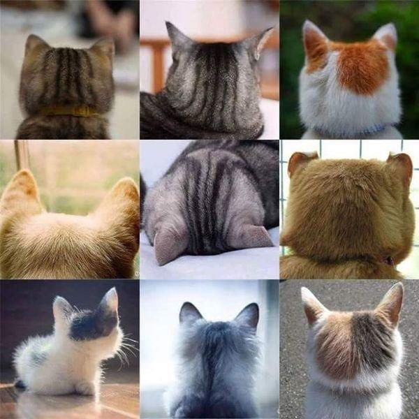 Chats sous tous les angles....