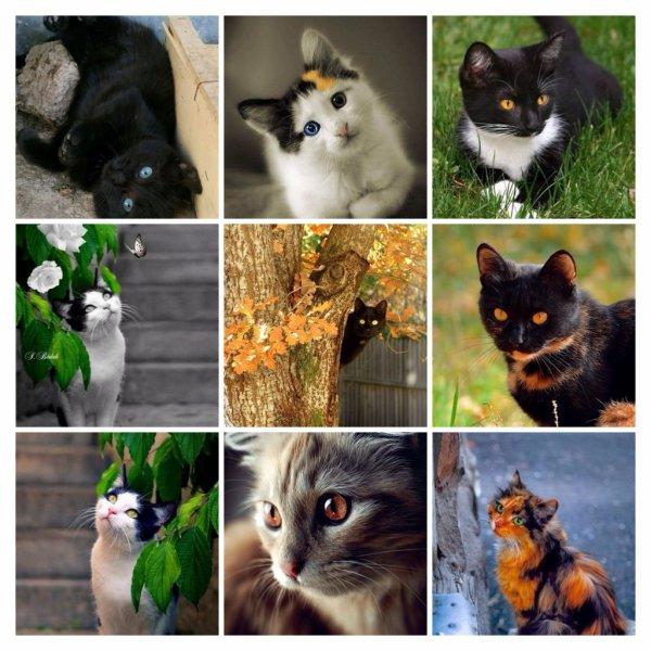 Attitudes Cats ....Jolis Regards.
