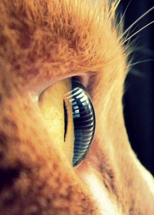 Des regards sublimes et leur complexité.....il faut tout savoir....vous voulez ?