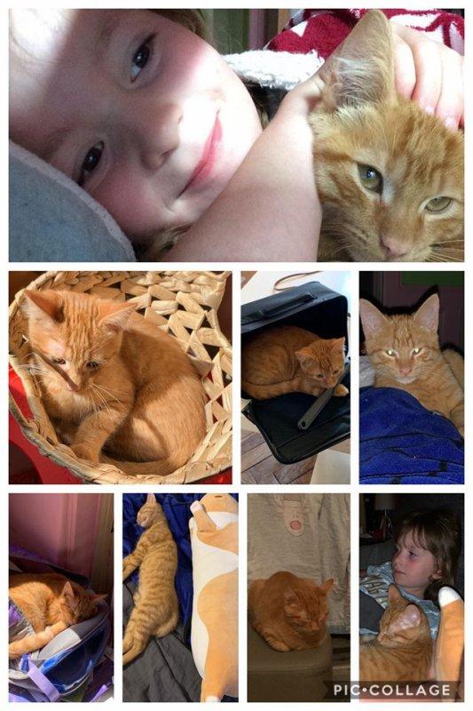 Lilly et son meilleur Ami Kiwi petit chat roux adorable....