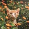 Petit à petit, les Chats deviennent l' âme de la maison....