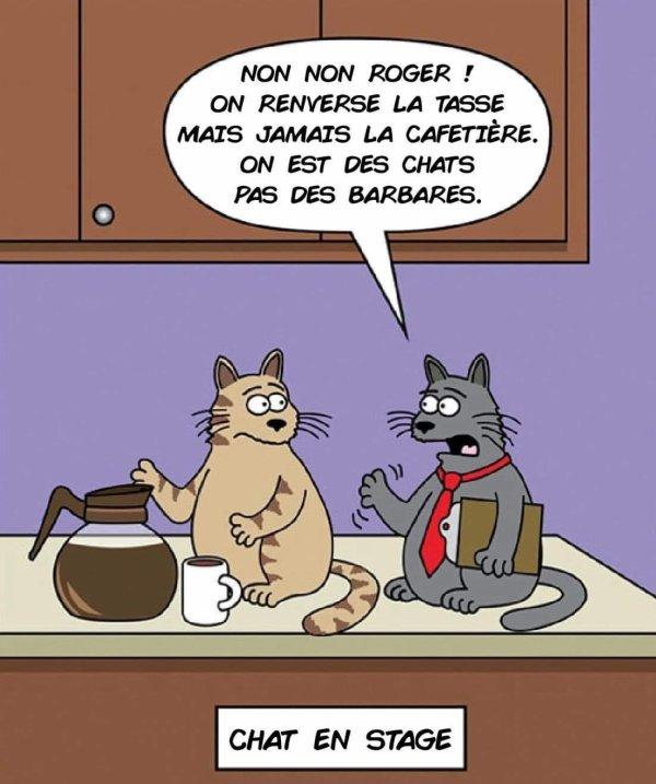 Humour Félin