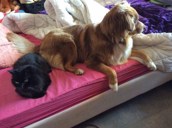 Raku et son nouvel Ami Papy Lilou, ce matin, à quel moment puis je faire mon lit....on pourrait croire qu'ils me demandent où je vais encore....