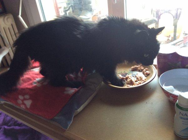 Papy Lilou met les pattes dans l'assiette, c'est trop bon !!!!