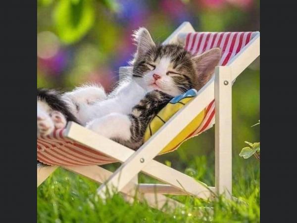 Je vous souhaite un Bon Vendredi ensoleillé ☀ à tous