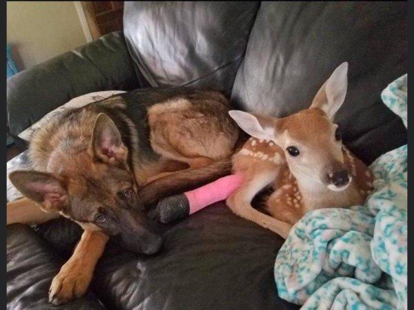 L'objet de l'Admiration des gens restera toujours la capacité unique des chiens à être si amicaux, attentionnés et fidèles