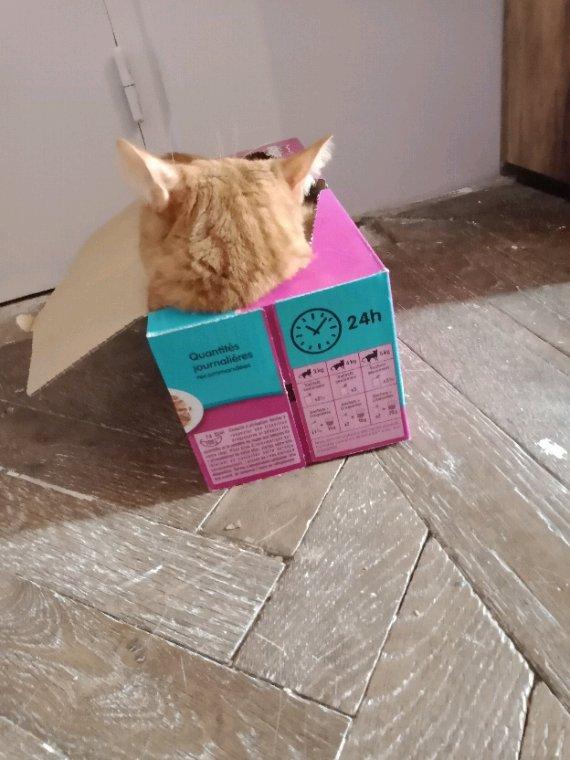 Voilà je suis en chambre....kiyou adore les cartons....chez ma fille