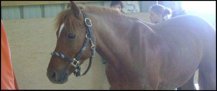 Si un jour je tombe avec mon cheval, je vous en suplie, relevez d'abord mon cheval.