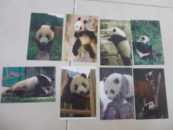 panda Séries 8 Cartes postales China