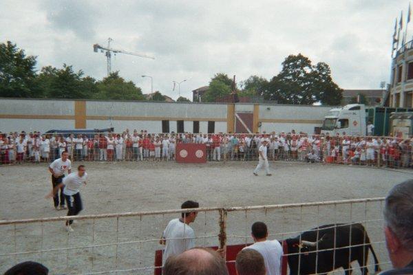 Bonus Dax 2011 4: Course de vache 2
