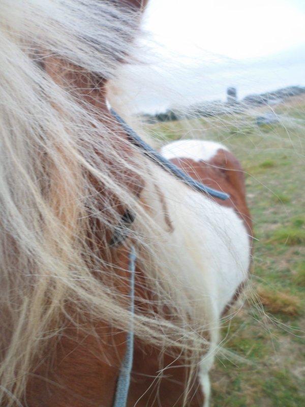 """""""L'homme murmure à l'oreille des chevaux, comme à l'oreil de son âme.♥""""Bebeyy♥ツ"""