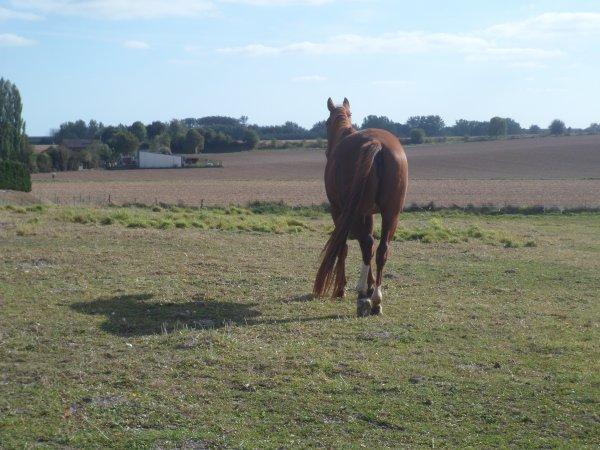 Une Terre...Du sable...La mer...Le monde...Les pays...Sans chevaux tous cela n'est rien♥.
