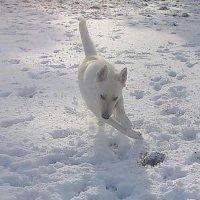 Quand la neige est l'hiver arrive mes chiens sont heureux :)