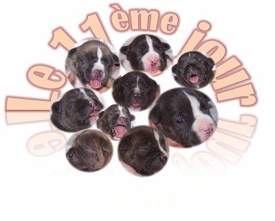 Bonne nouvelle! Leur yeux commencent à s'ouvrir  Today - le 11ème jour!