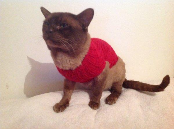 Premier tricot