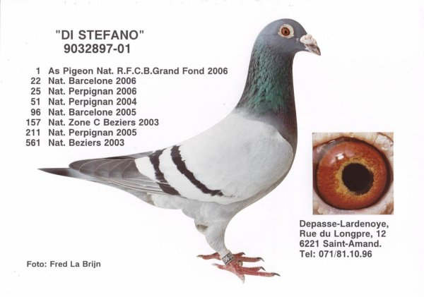 "FILS DU ""DI STEPHANO"" DEPASSE  :1°AS PIGEON NATIONAL BELGE GRAND FOND 06"