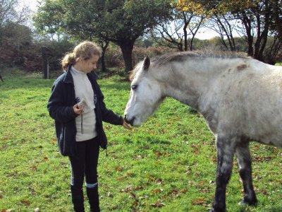 Les Photos de cavaliers + chevaux .