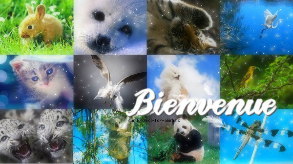 Bienvenue on Protect-For-Animals « Voir, Comprendre, Réagir ! »