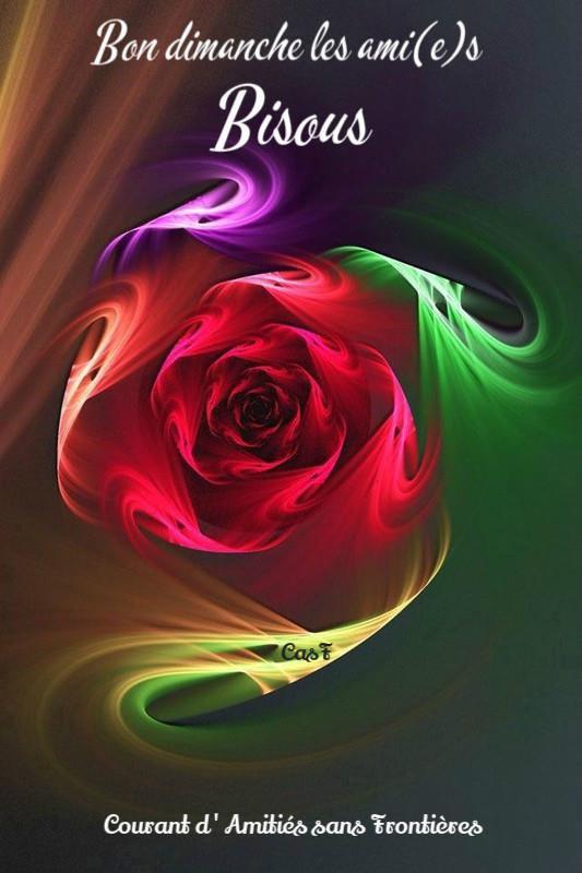 mon amie la rose!!!!!!!!!!!!!!!!