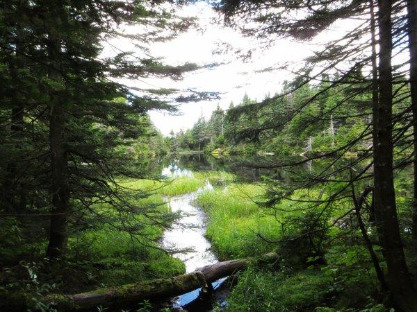 Parc naturel de Sutton