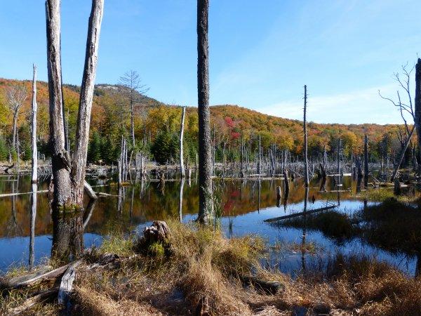 Adirondacks jour 5 : Mount Van Hovenberg