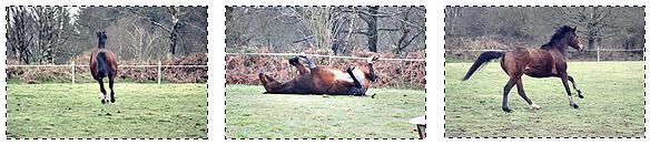 """"""" Bien mérite d'aller à pied, qui ne prend soin de son cheval"""" Proverbe français"""