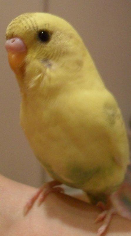 Portrait de Yellow