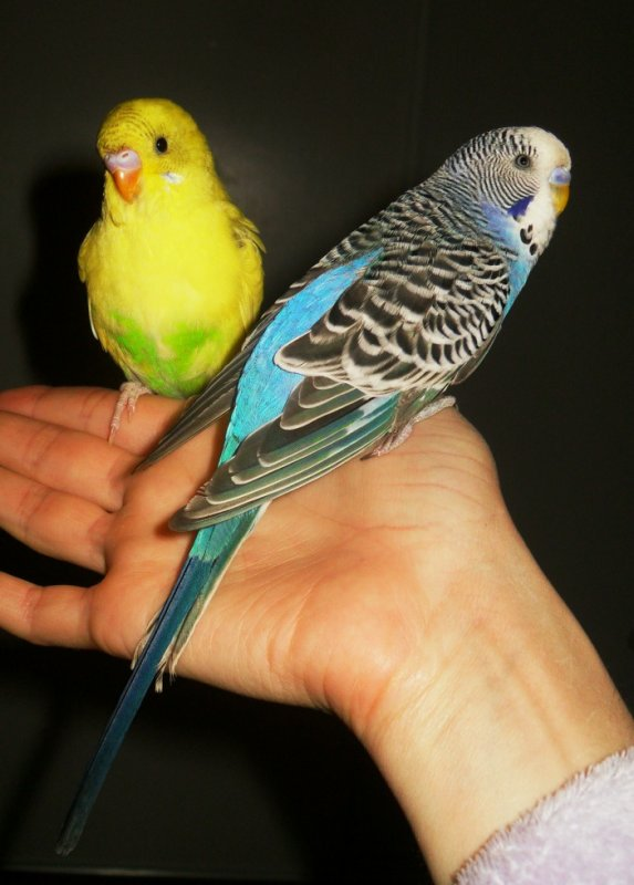 Yellow et Blue