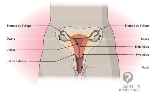 cycle menstruel de la femme blog de pma iac ifsi. Black Bedroom Furniture Sets. Home Design Ideas