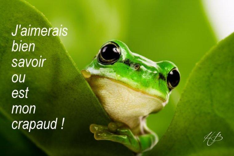 Grenouille dit....