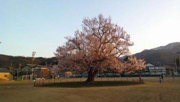 La saison de SAKURA au Japon (*´∀`)